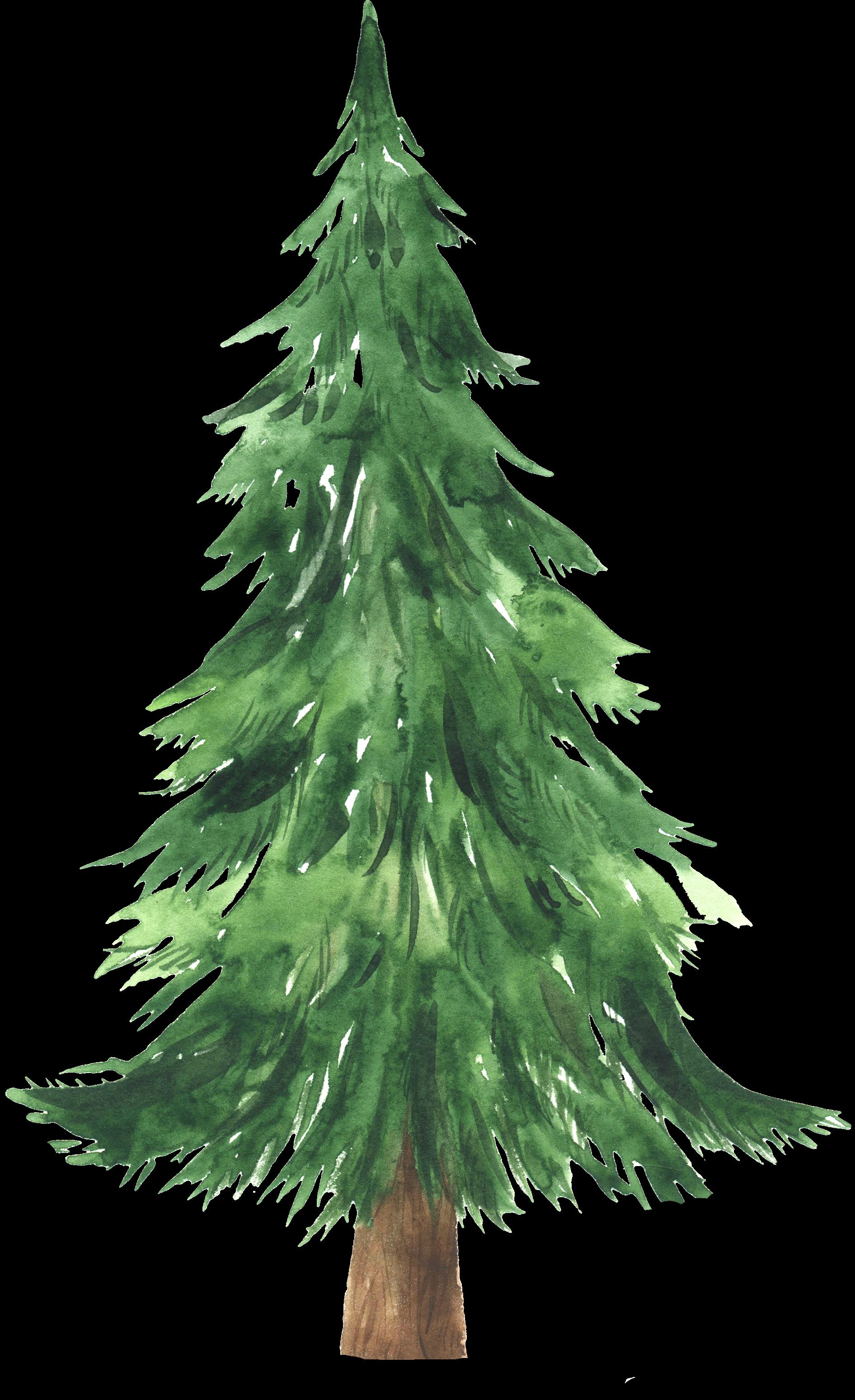 Among the Evergreens